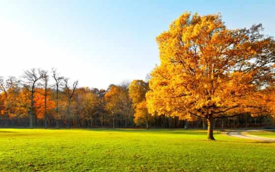 осеннем, природа, лесу