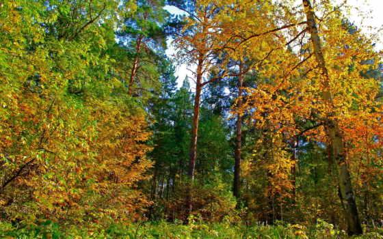 природа, осень, листья