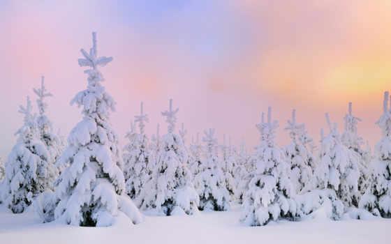 фоны, winter, зимние, природа, год, time, grandwallpapers, елки, снегу,