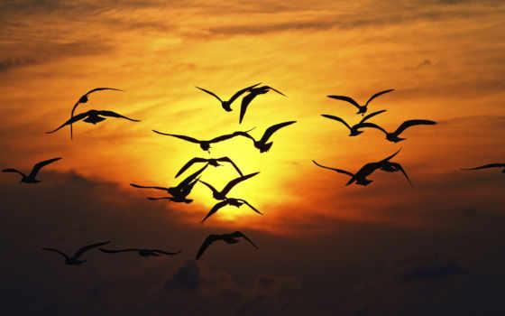 закат, силуэт, птицы, enseñaste, природа, море, крылья, volar, полет,