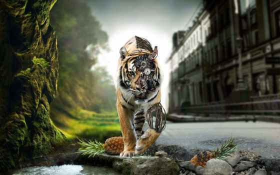 rocks, тигр, природа, выгул, cyborg, added, adršpach, лет, tigers, ago,