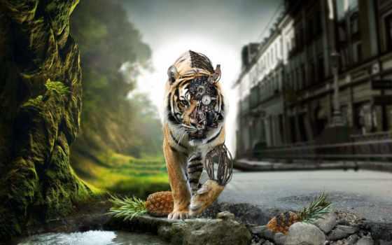 rocks, тигр, природа, выгул, cyborg, added, adršpach, лет, tigers, ago,