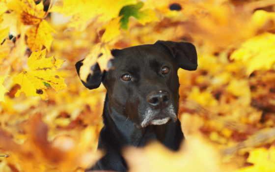 прикольные, смешные, осень, приколы, собака, листья, желтый,