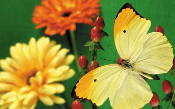 бабочки, бабочек, красивые, телефон, экран, весь, бабочка,