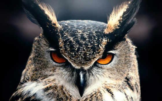 glaza, совы, сова, взгляд, филин,
