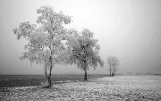 winter, christmas, снег