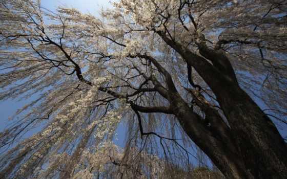 фотообои, купить, дерево