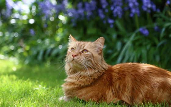 uhd, кот, larger