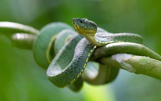 snake, desktop, зелёный, photos, branch, images, free,