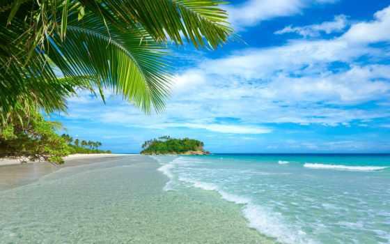 пальмы, море, пляж, summer, tropics, trees, природа, небо,