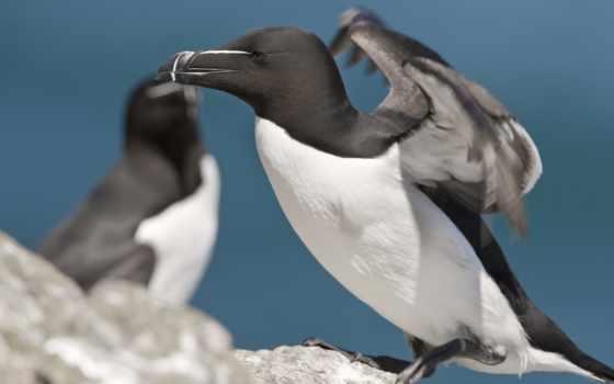 смысле, tapety, www, птицы, планеты, природы, land,
