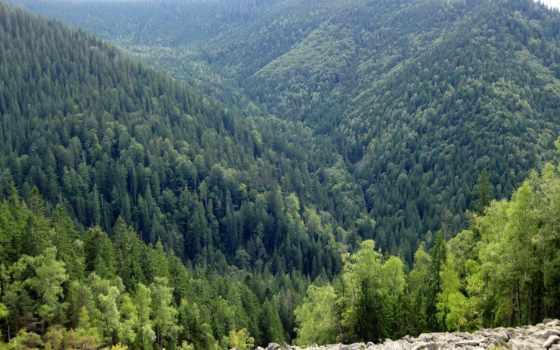 горы, регистрации, растительность, телефон, ущелье,