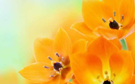 upload, бабочка, оранжевый, цветы, cartoon, free, брайан,