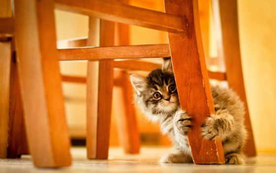 обои, котенок, стулом, стул, под, за, большая, мал