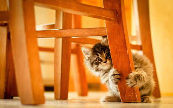 котенок, стулом