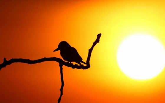 хороший, утро, вечер, pinterest, ночь, images, sunshine, pin,