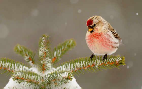 winter, birds, zhivotnye