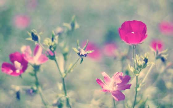 дет, var, февр, cvety, ог, dag, mawar,