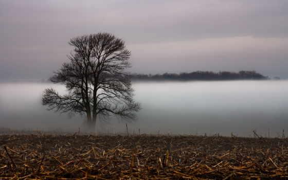 туман, дерево, поле