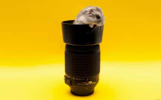 nikon, объектив, фотоаппарат, top, photography, animals, free,