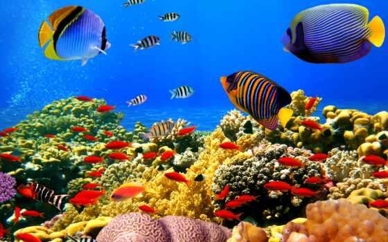 fish, shirokoformatnyi, underwater, море, ocean, world, заставка