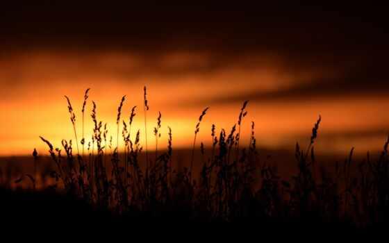 закат, природа, силуэт, небо, shirokoformatnyi, растение, красивый, трава, dark, дерево, free