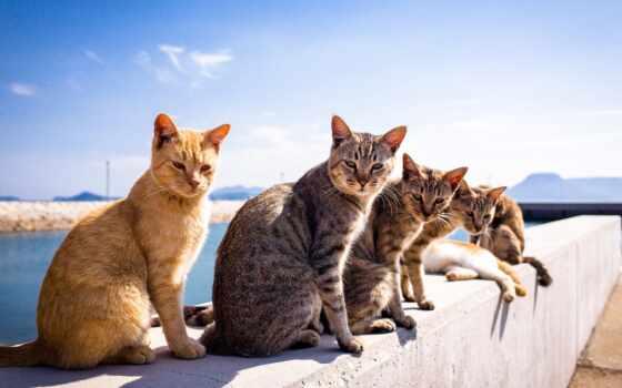 кот, animal, narrow, лет, хороший, небо, они, cover, словно