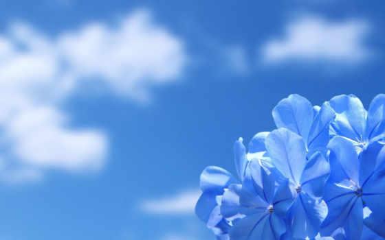 цветок, небо