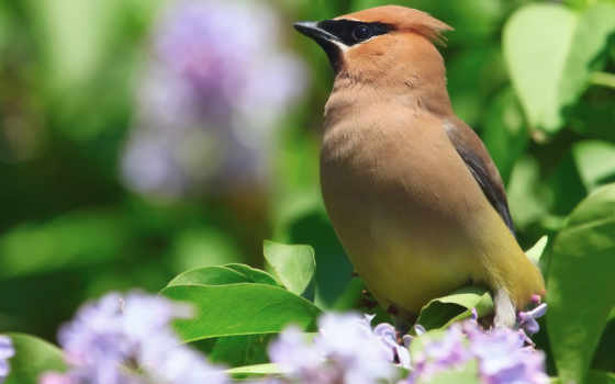 весна, природа, цветы Фон № 36449 разрешение 1920x1080