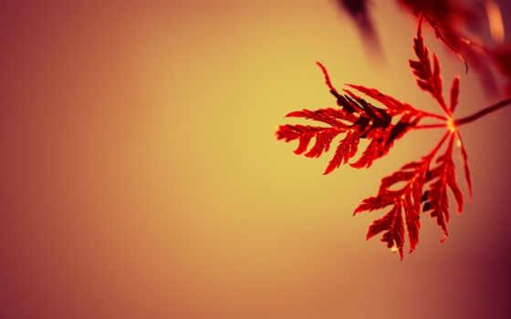 веточка, оранжевый, закат, градиент,