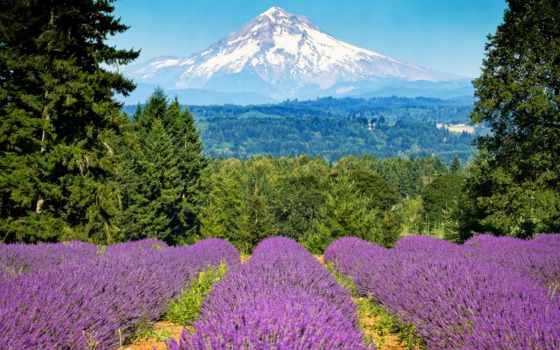 priroda, горы, лаванда