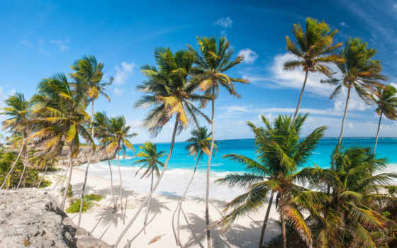 tropical, services, palm