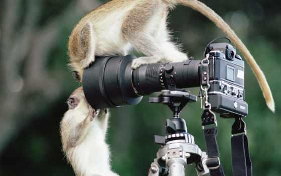 фотографа, поздравляю, всех