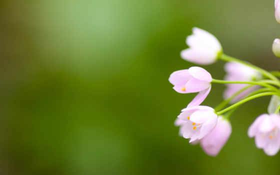 color, зелёный, цветы, природа, базовый, full, три, распространен,
