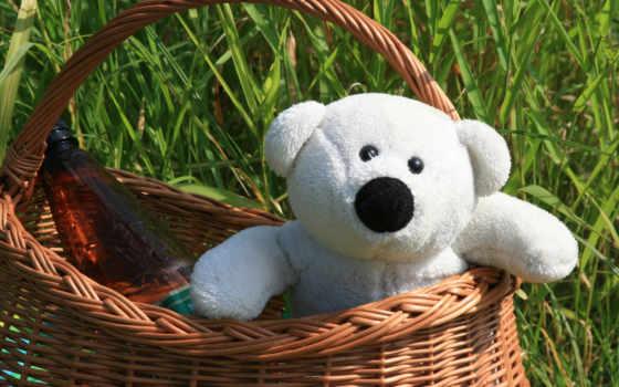 teddy, картинка, корзина