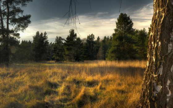 береза, дерево, трава, ствол, дверь, кора, durdle, опушка, пожухлая, lulworth,