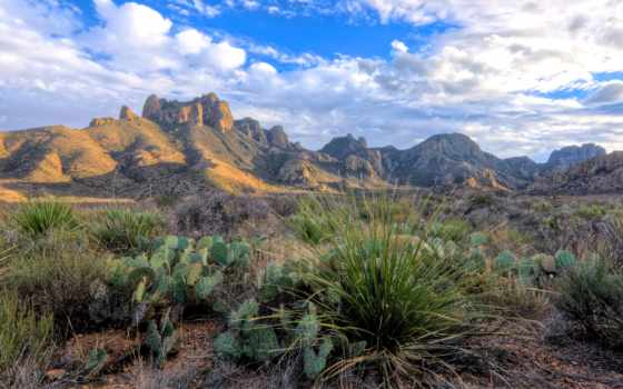 texas, park, national, изгиб, горы, биг, кактусы, виды, сша, скалы,