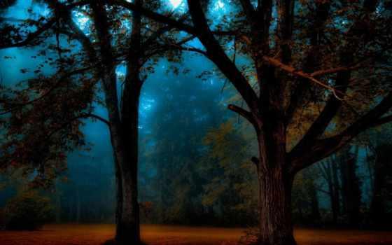 pulpit, drzewa, tapety, las, ciemny, światło, tapet, przebijające, znajdziesz, категории,
