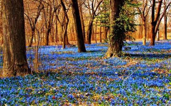 лес, лесу, весна, подснежники, года, time, цветы, our, подснежник, than,