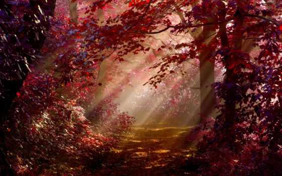 erdő, háttérkép, háttérképek, még, fénybe, нем, erdős, mindig, kategória, fák, дек,