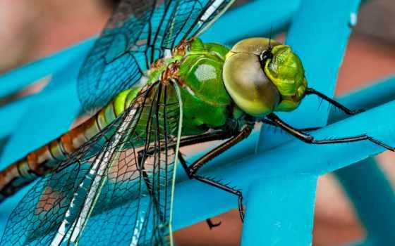 стрекоза, free, насекомое, stock, фото, об, зелёный, photos, pexels,