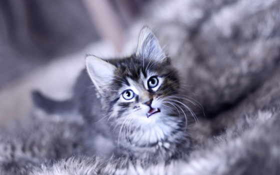 кот, морда, cry, котенок, котята, abyss, kittens,
