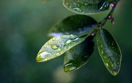 макро, листва, капли, waters, branch,