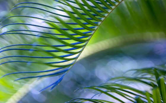 palma, зелёный, лист, дерево
