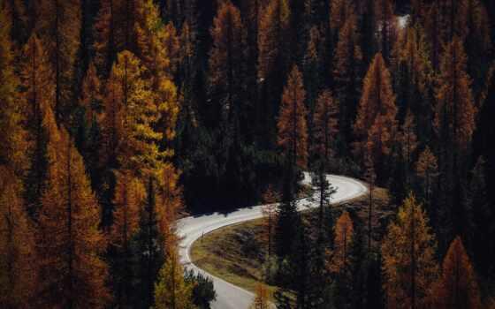 поле, depth, фото, pexel, automotive, осень, barloworld, facebook, лес, первую, взгляд