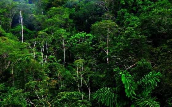 jungle, tropical, коллекция
