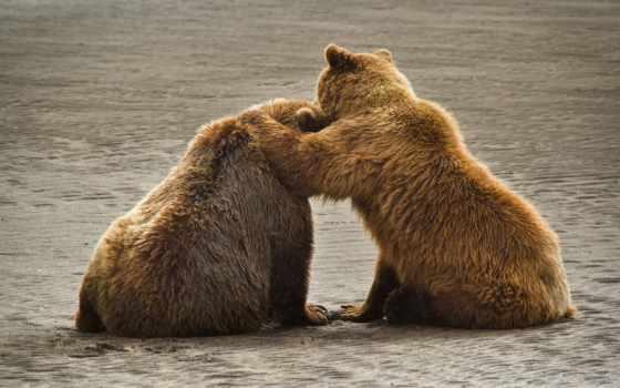 медведи, животные, бурые Фон № 73090 разрешение 1920x1080