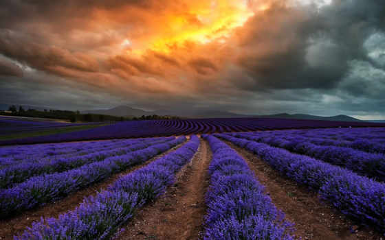 lavender, пейзажи -, мб