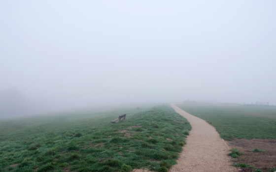 туман, дорога, поле