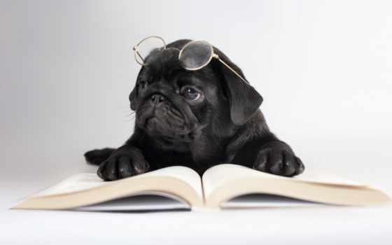 собака, очки, собаки, книга, взгляд, трава, лежит, zhivotnye,